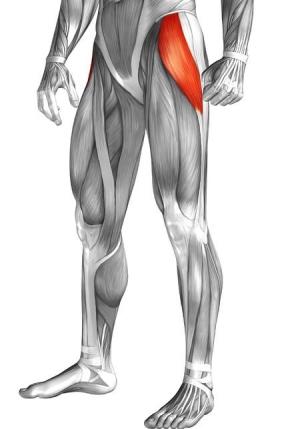 tensor-fasciae-latae-pain-anatomy
